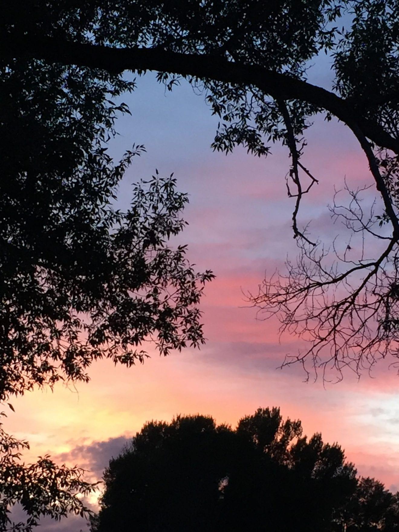 sunset backyard